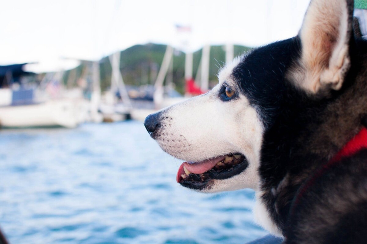 How to: Bring Pets on Sailing Holidays